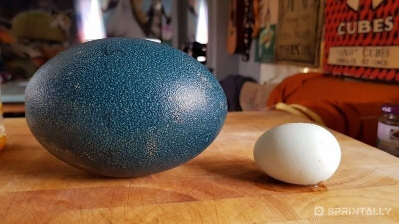 EMU egg vs chicken egg