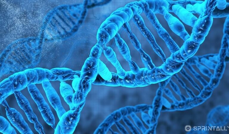 Interesting facts about DNA