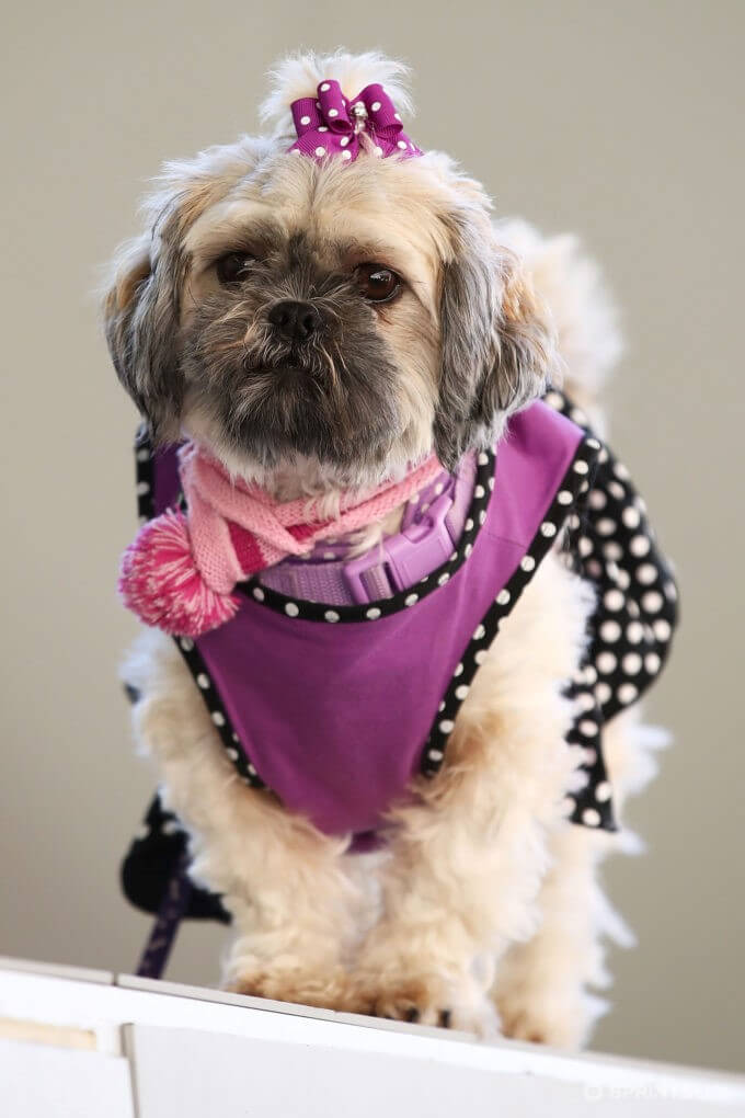 THE DOG IN THE MERCEDES-BENZ FASHION WEEK IN SYDNEY