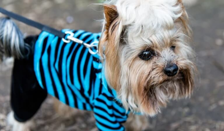 Fashion for dogs – what you need to know about it?