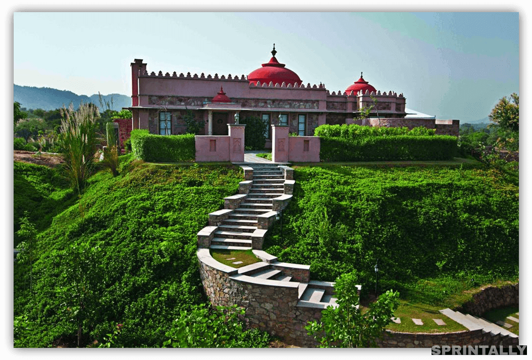 The Tree Of Life, Jaipur