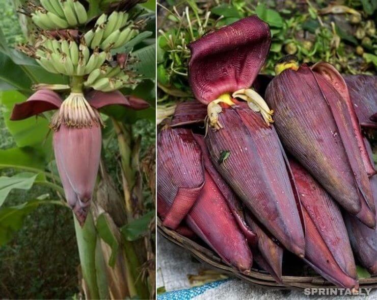 So blooming banana