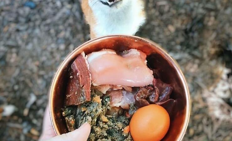 The whole truth about how to keep fox at home