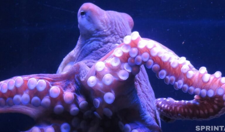 That's what happens if you plant an octopus in a jar and close it with a lid