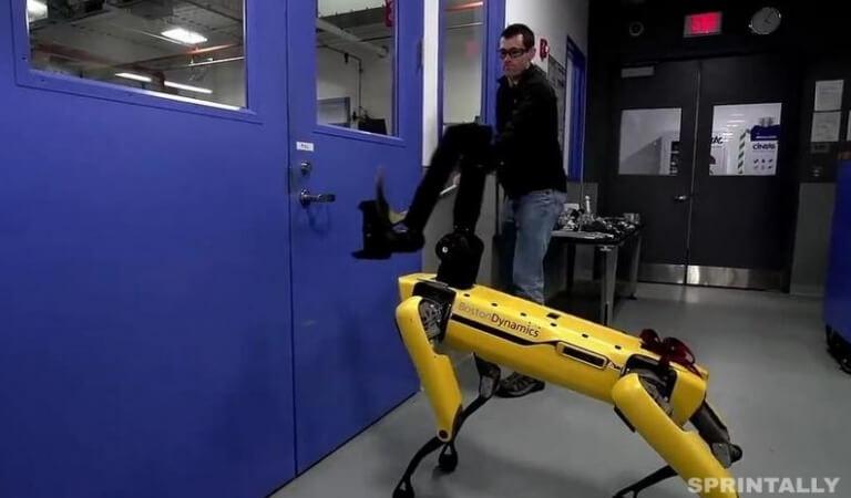 Robotics checked the robot dog for driving