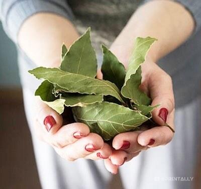 Bay Leaf On Hand
