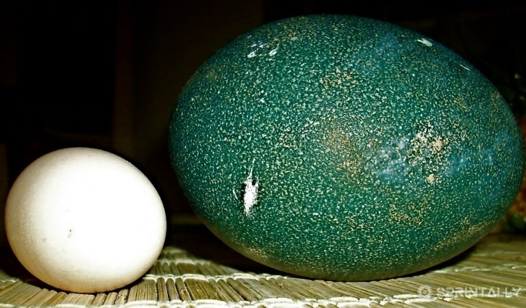 The farmer bought egg for incubation, and this is what came of it