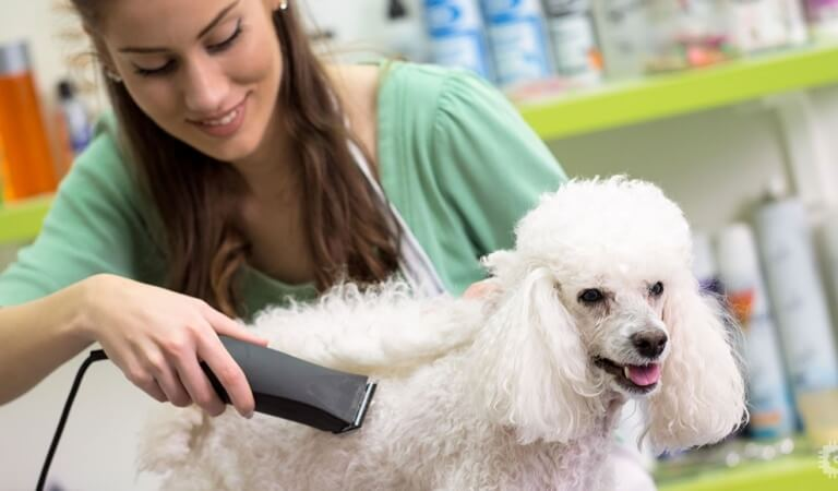 Dog grooming: tips and tools