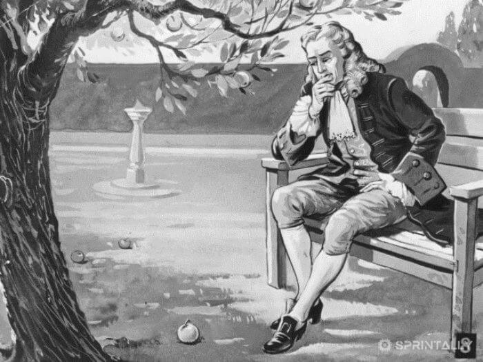Newton Discovered The Law Of Gravity Through The Apple That Fell On His Head
