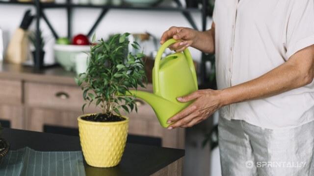 Pour Plants