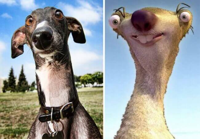A Greyhound Vs. Sid From Ice Age
