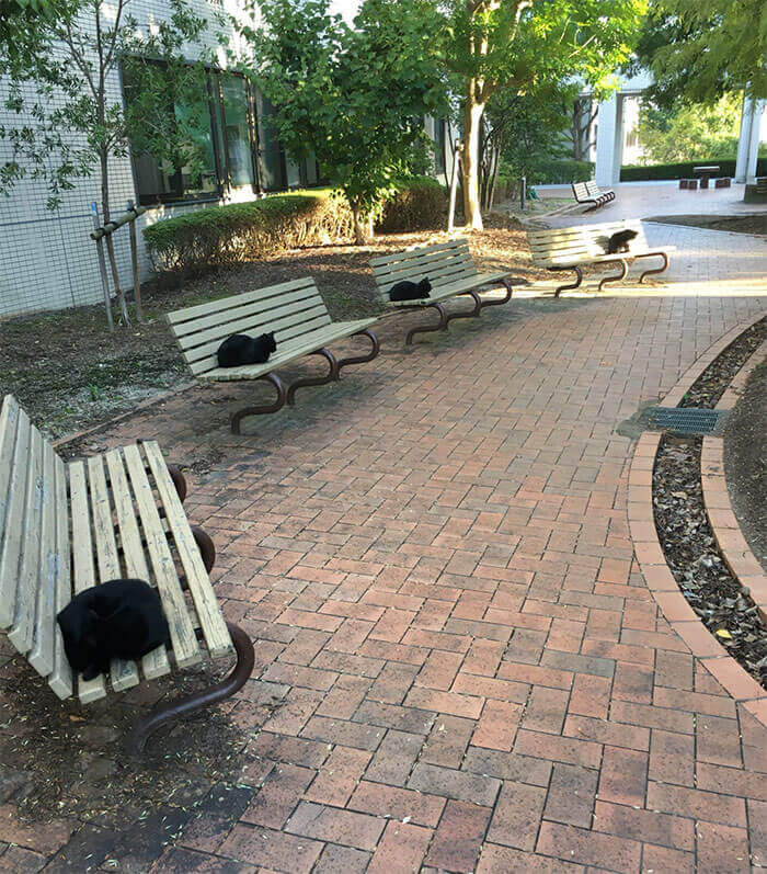 One Black Cat On Each Bench
