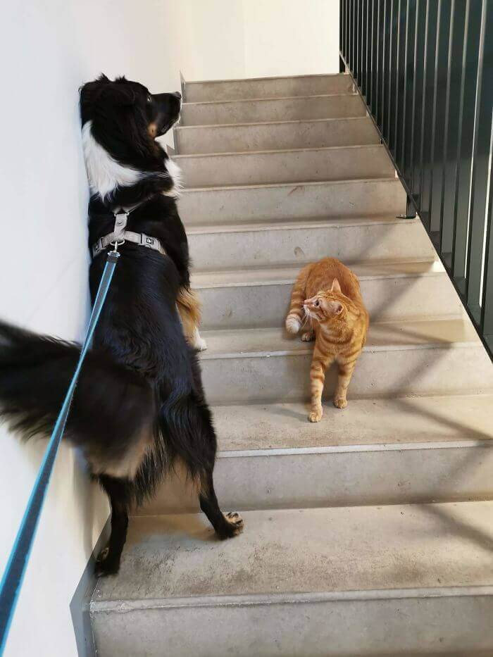 This Dog Seems To Have Heard About Social Distance, But The Cat Doesn't