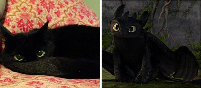 Toothless In Cat Form