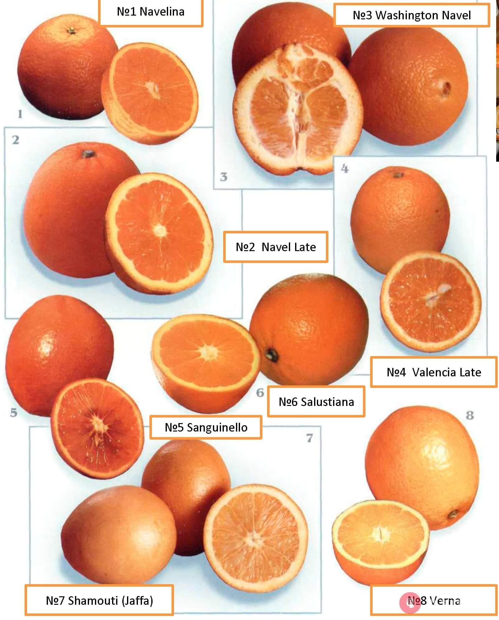 Industrial Varieties Of Light Oranges