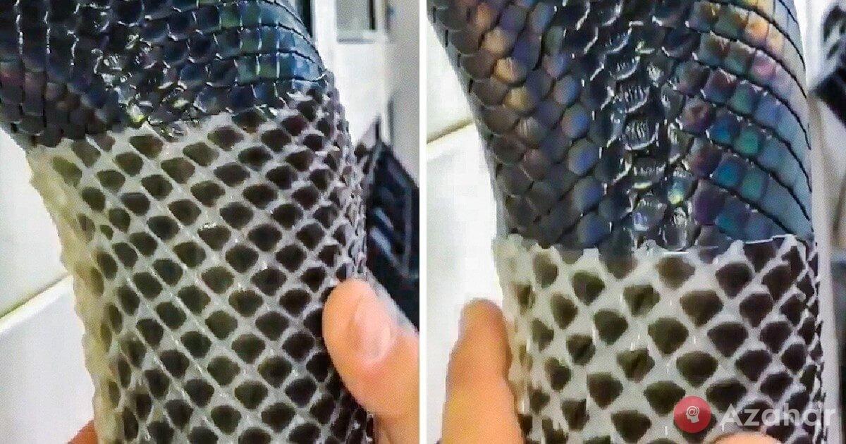 Shedding Snake