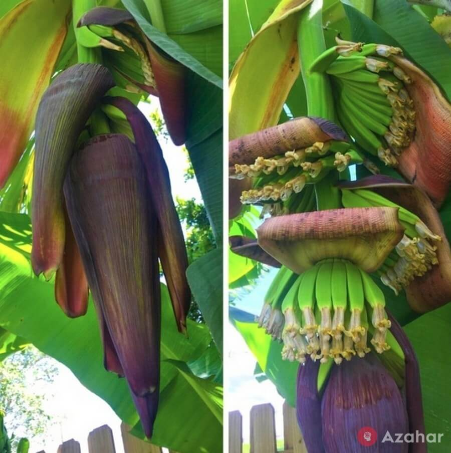 So grow bananas