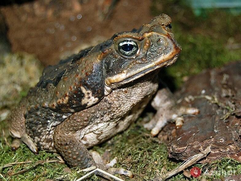 Frog Toad Aha