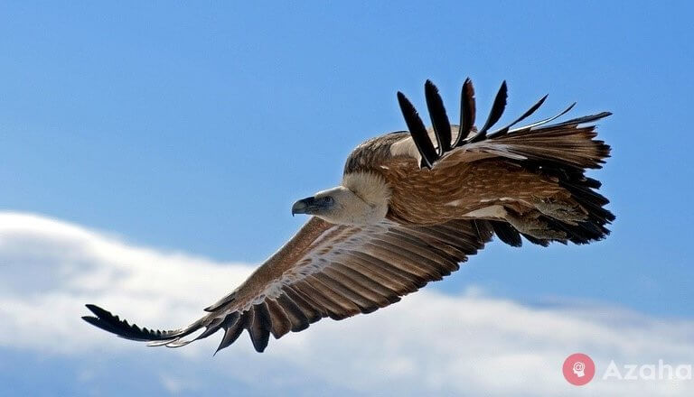 11 kilometers above sea level: which birds fly above all