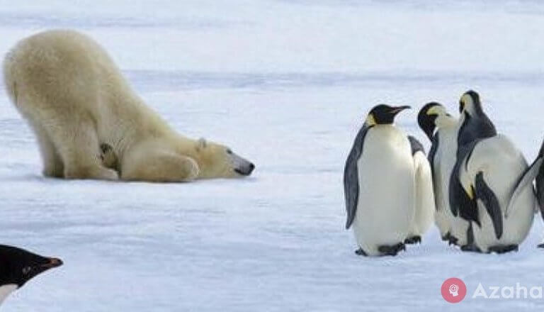 Why polar bears don't eat penguins?