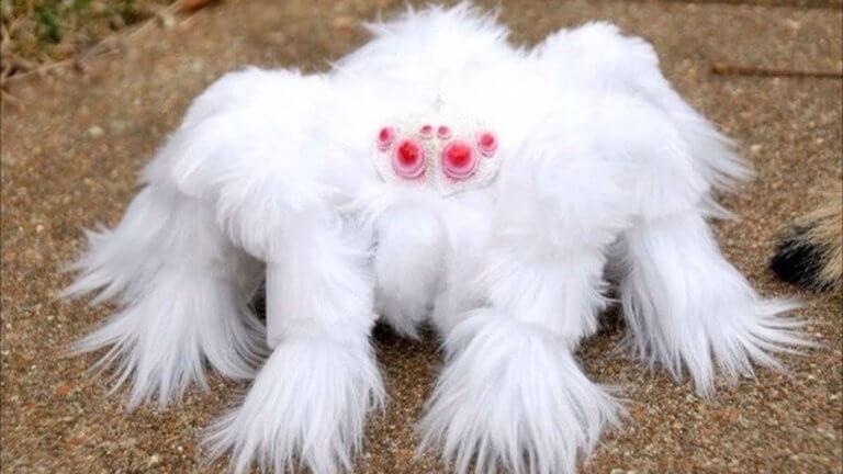 Smallest Spiders