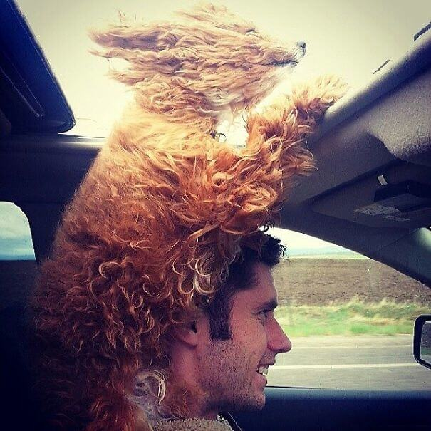 A Travel Loving Dog