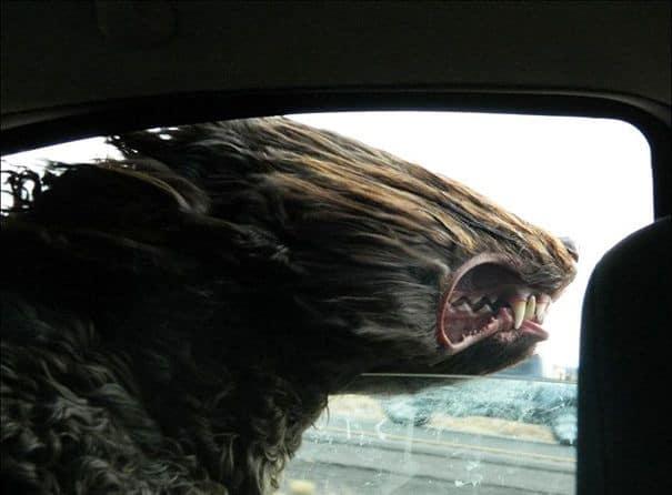 Enjoying The Wind