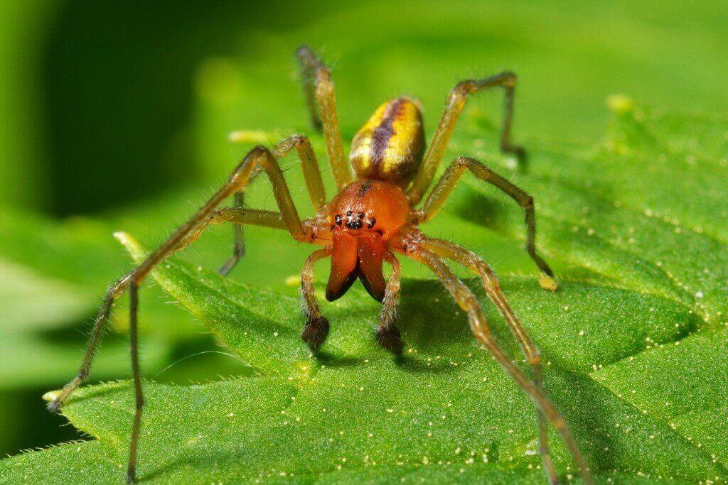 Yellow Spider Sak