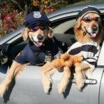 Funniest Dogs