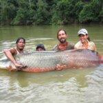 Largest Freshwater Fish