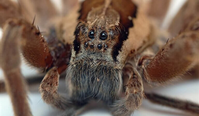 10 scariest spiders in the world