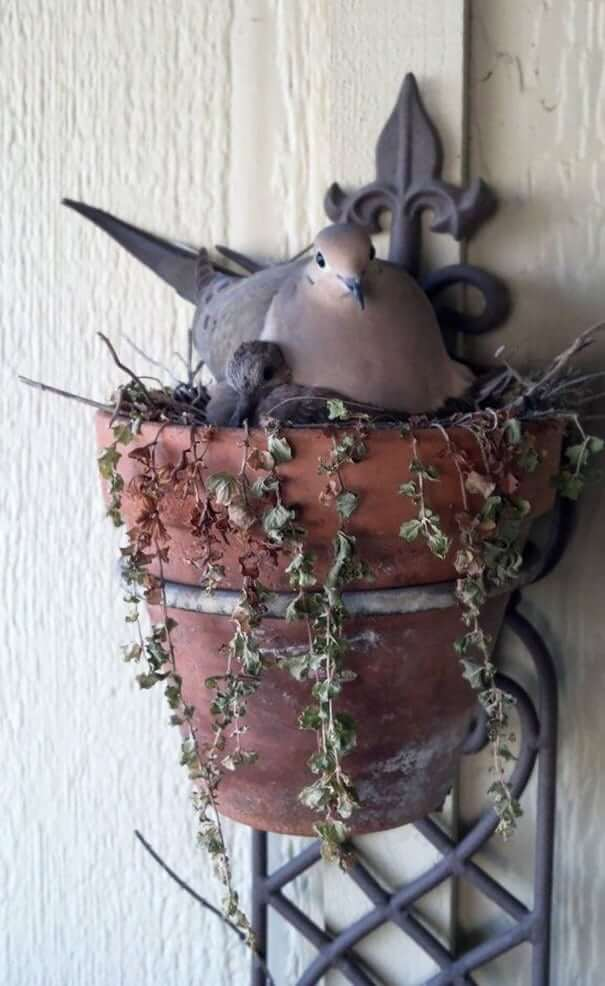 And Again A Flower Pot