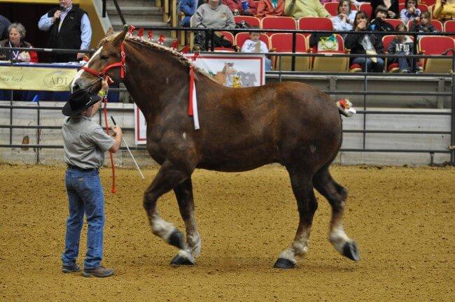 Dr Leger Horse