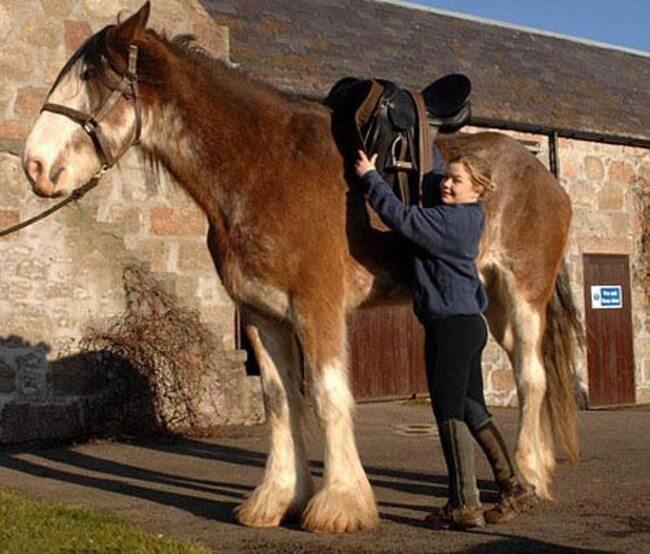 Duke Horse