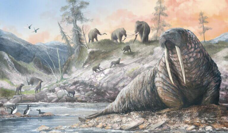 Top 10 extinct animals caused by human