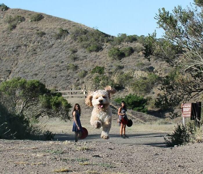 Giant Dog Between Two Girls