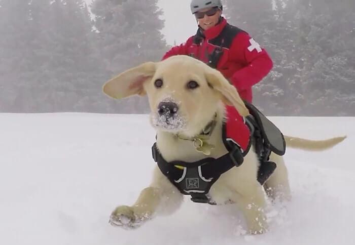 Giant Dog On Ice