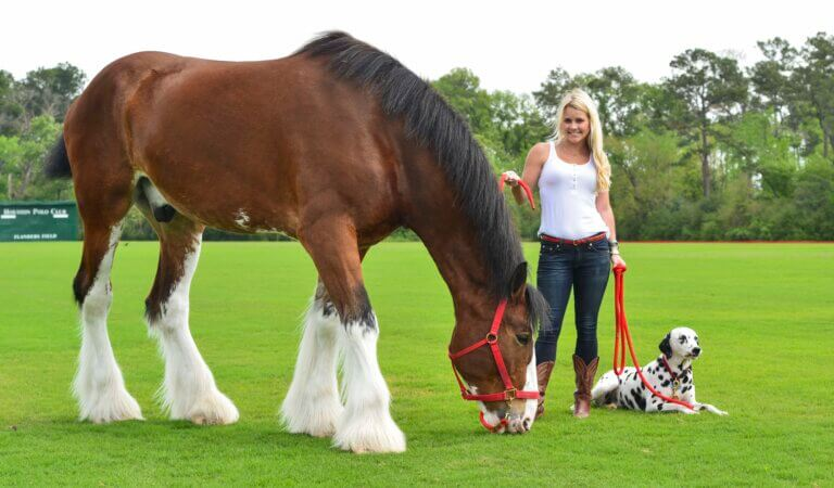 Top 10 biggest horses in the world