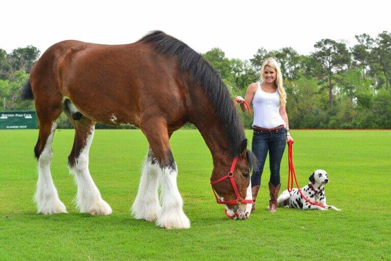 Biggest Horses