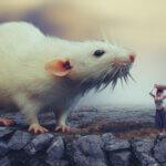 Biggest Rats