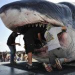 Biggest Sharks
