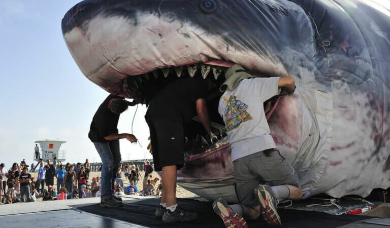 Top 11 biggest sharks in the world