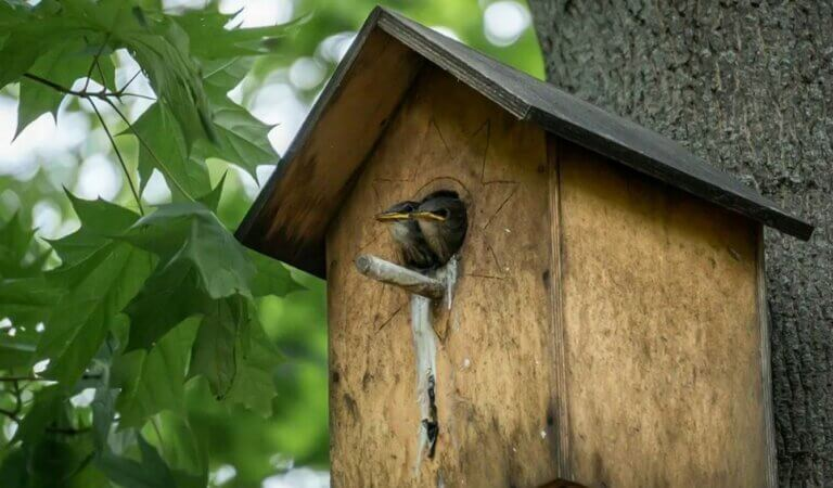 44 unexpected places to build bird nests
