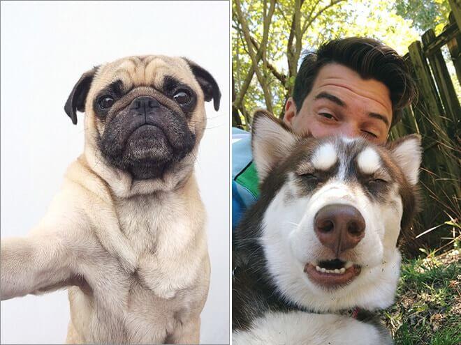Dog Selfie10