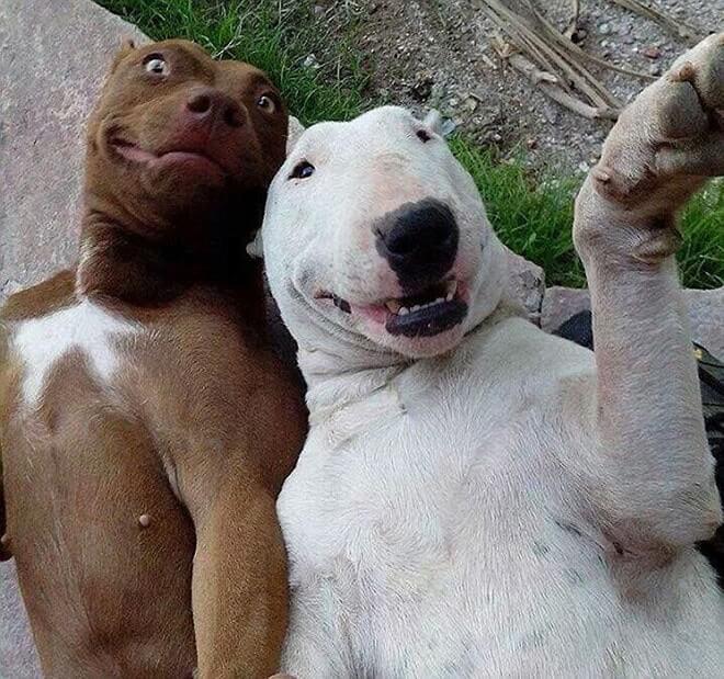 Dog Selfie13