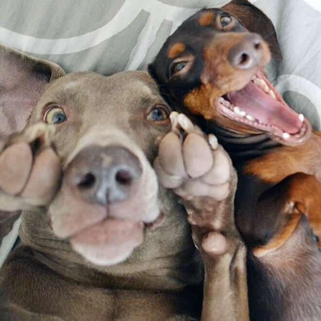 Dog Selfie14