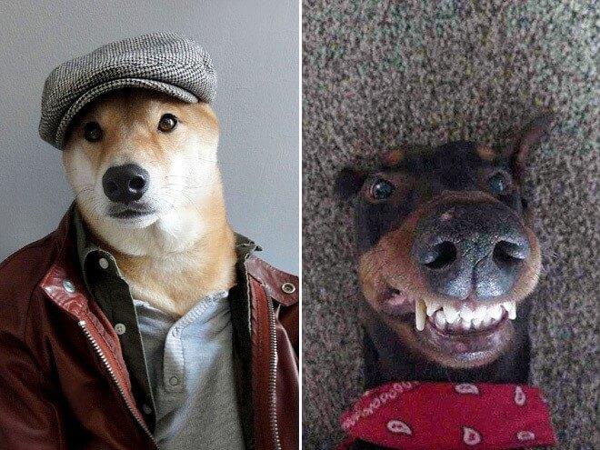 Dog Selfie15