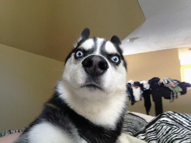 Dog Selfie18