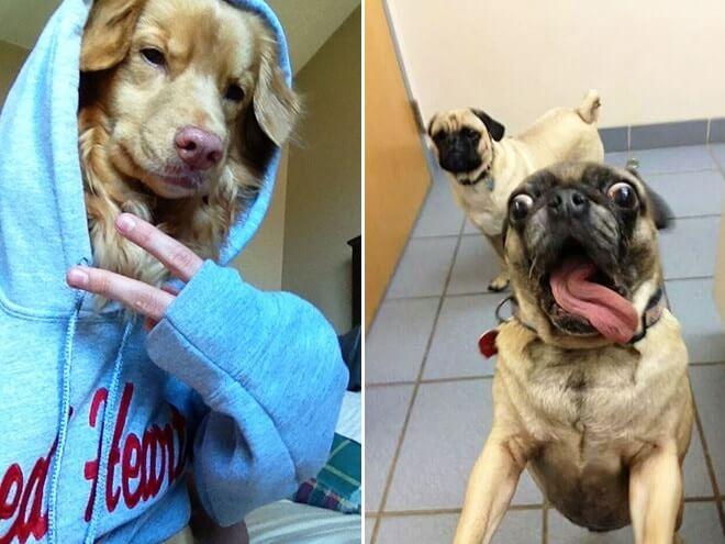 Dog Selfie2