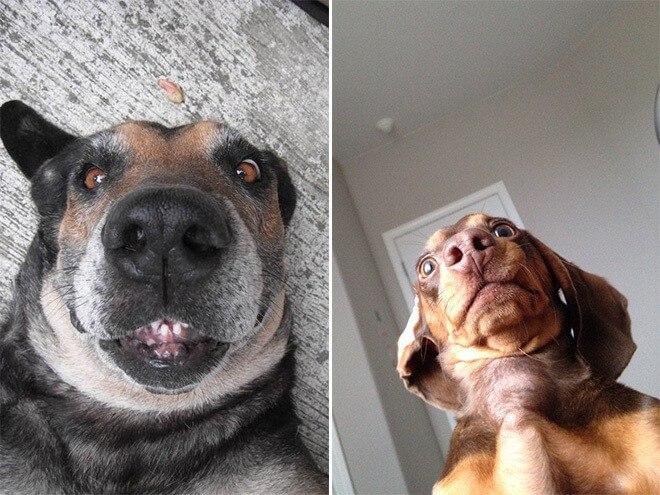 Dog Selfie4